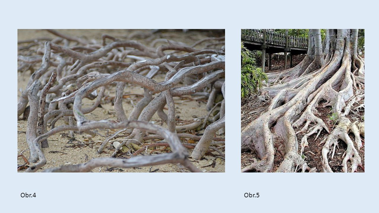  Co vás napadá při pohledu na fotografie kořenů ?  Jaké jsou ?  Jaké máte pocity a proč ?