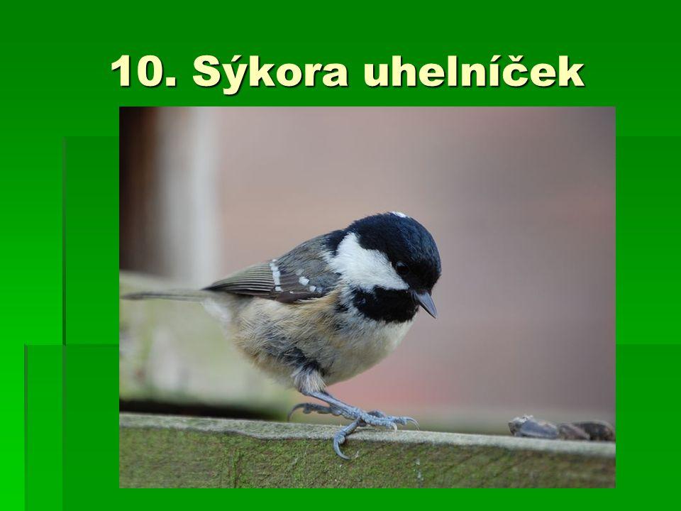 10. Sýkora uhelníček