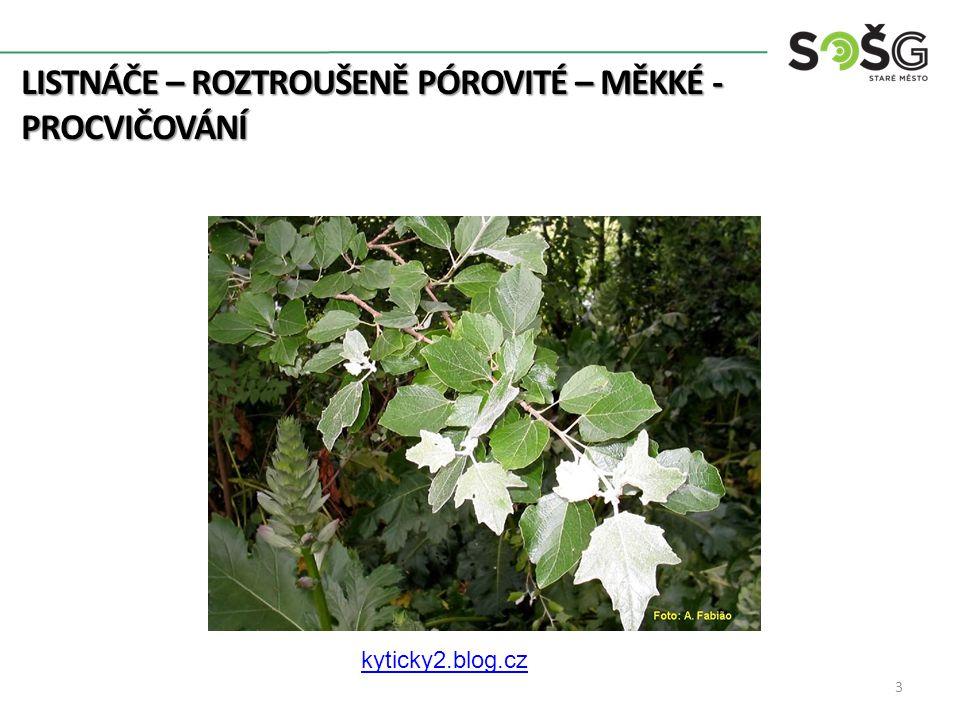 LISTNÁČE – ROZTROUŠENĚ PÓROVITÉ – MĚKKÉ - PROCVIČOVÁNÍ 3 kyticky2.blog.cz