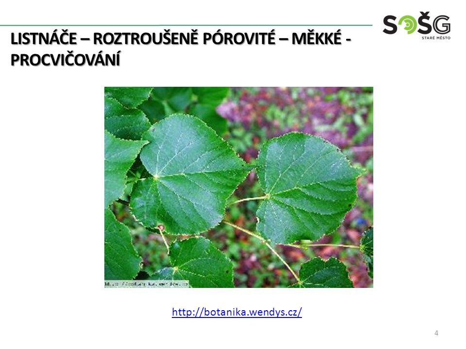 LISTNÁČE – ROZTROUŠENĚ PÓROVITÉ – MĚKKÉ - PROCVIČOVÁNÍ 4 http://botanika.wendys.cz/