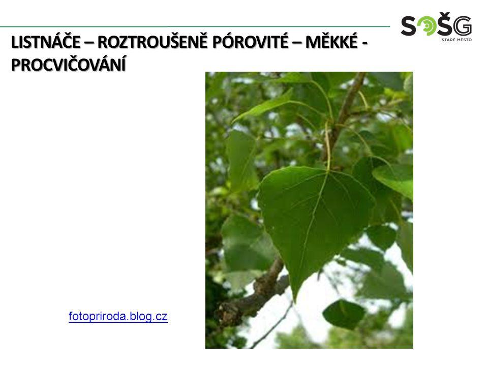 LISTNÁČE – ROZTROUŠENĚ PÓROVITÉ – MĚKKÉ - PROCVIČOVÁNÍ 6 http://botanika.wendys.cz/