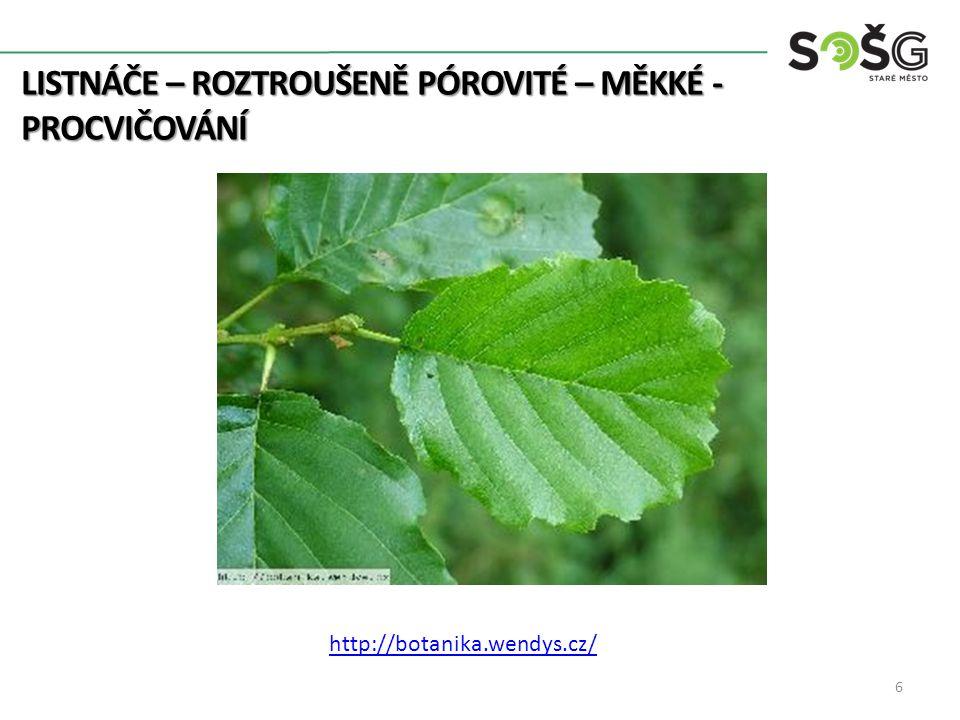 LISTNÁČE – ROZTROUŠENĚ PÓROVITÉ – MĚKKÉ - PROCVIČOVÁNÍ 7 http://botanika.wendys.cz/