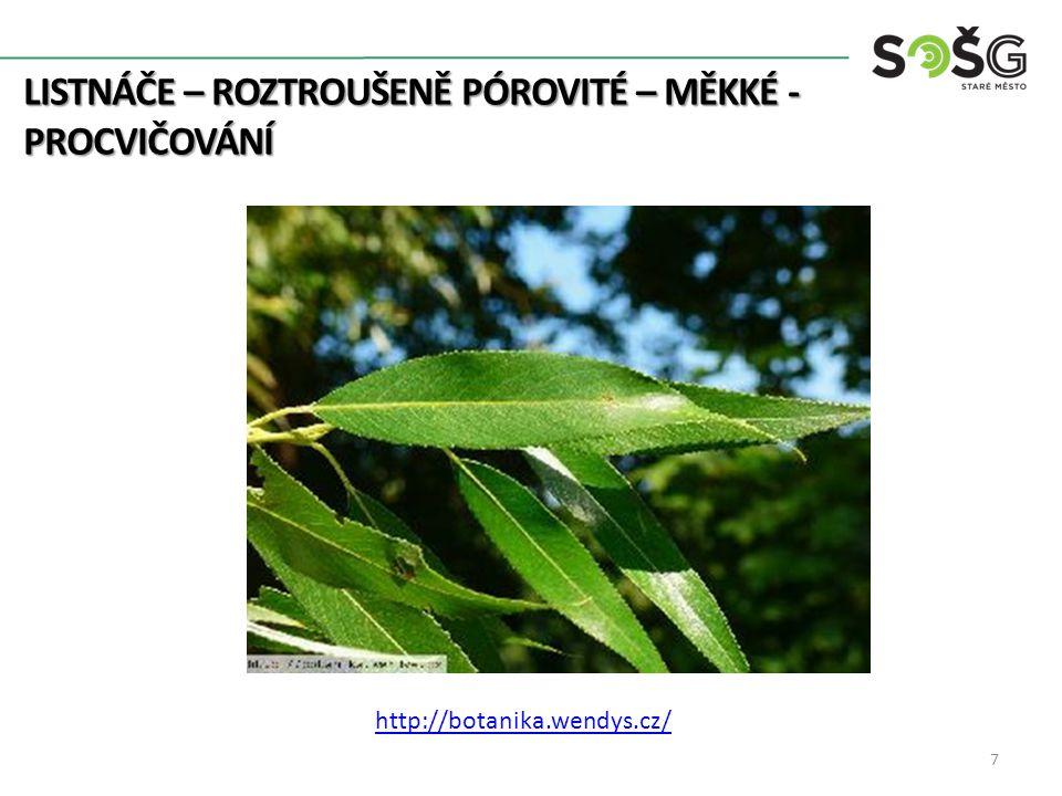 LISTNÁČE – ROZTROUŠENĚ PÓROVITÉ – MĚKKÉ - PROCVIČOVÁNÍ 8 botany.cz