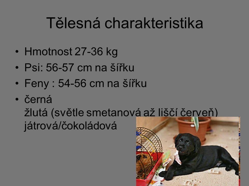 Tělesná charakteristika Hmotnost 27-36 kg Psi: 56-57 cm na šířku Feny : 54-56 cm na šířku černá žlutá (světle smetanová až liščí červeň) játrová/čokol
