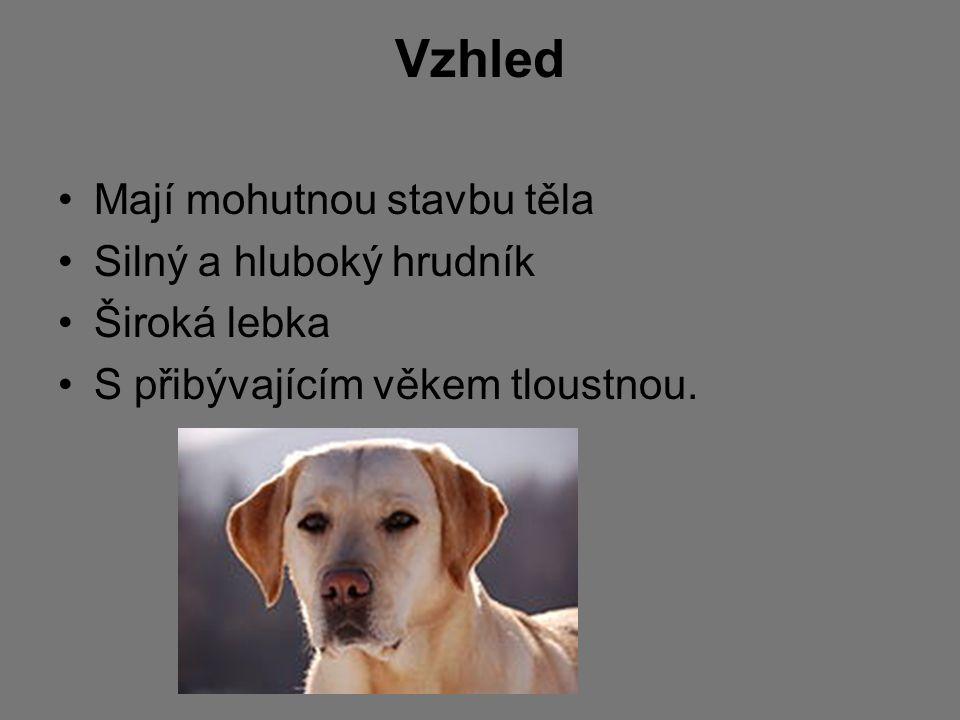 Povaha a schopnosti Labrador má velmi milou a přátelskou povahu Je bystrý a oddaný Velice dobře se cvičí, rád pracuje a plní povely s velkou radostí