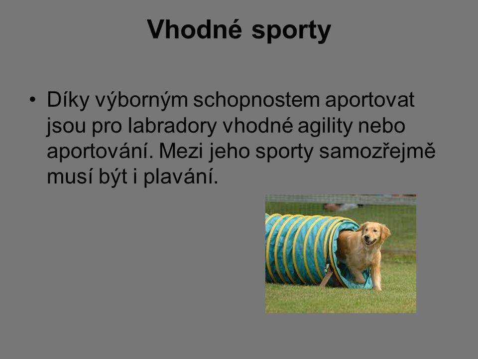Vhodné sporty Díky výborným schopnostem aportovat jsou pro labradory vhodné agility nebo aportování. Mezi jeho sporty samozřejmě musí být i plavání.