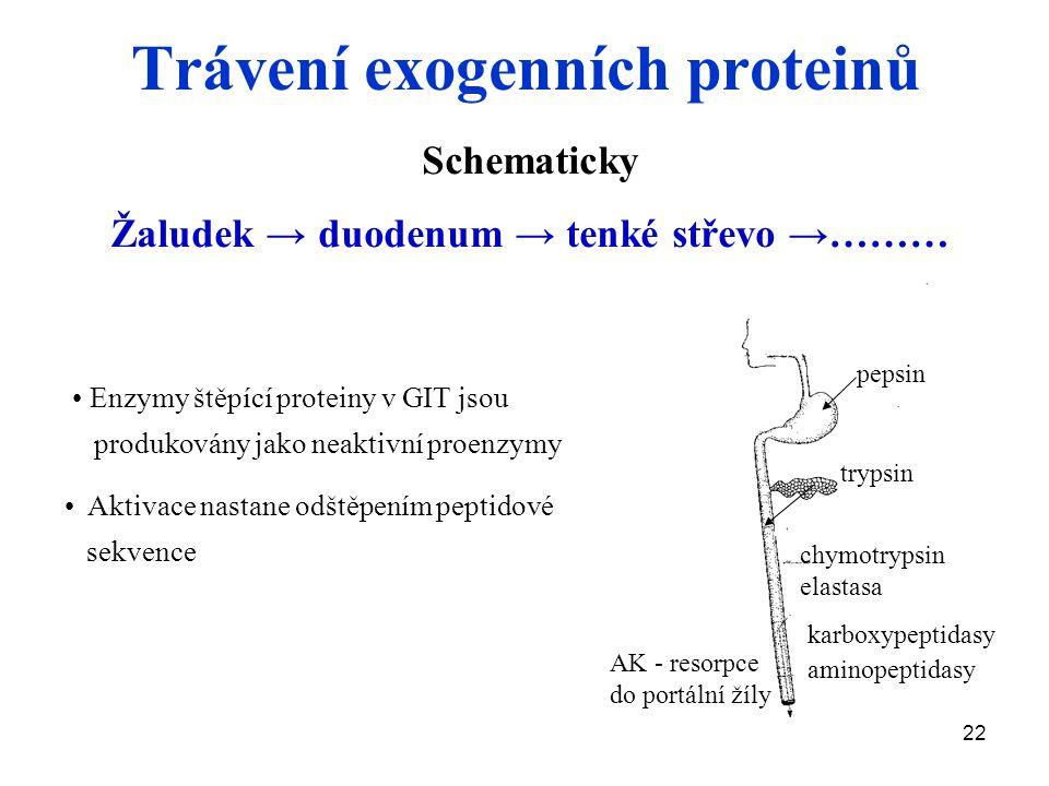22 Trávení exogenních proteinů Schematicky Žaludek → duodenum → tenké střevo →……… Enzymy štěpící proteiny v GIT jsou produkovány jako neaktivní proenzymy Aktivace nastane odštěpením peptidové sekvence trypsin chymotrypsin elastasa karboxypeptidasy aminopeptidasy pepsin AK - resorpce do portální žíly