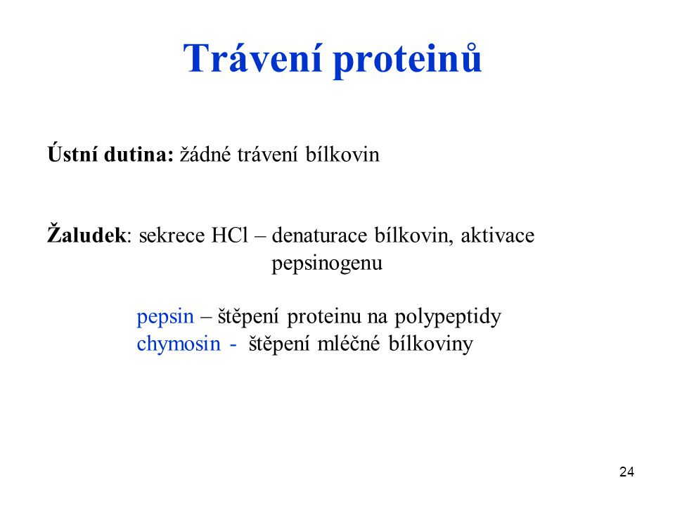 24 Trávení proteinů Ústní dutina: žádné trávení bílkovin Žaludek: sekrece HCl – denaturace bílkovin, aktivace pepsinogenu pepsin – štěpení proteinu na polypeptidy chymosin - štěpení mléčné bílkoviny