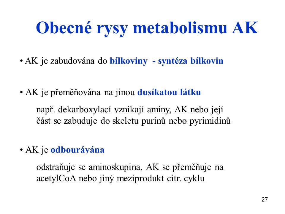 27 Obecné rysy metabolismu AK AK je přeměňována na jinou dusíkatou látku např. dekarboxylací vznikají aminy, AK nebo její část se zabuduje do skeletu