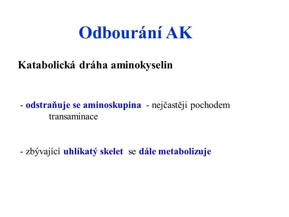 Odbourání AK Katabolická dráha aminokyselin - odstraňuje se aminoskupina - nejčastěji pochodem transaminace - zbývající uhlíkatý skelet se dále metabolizuje
