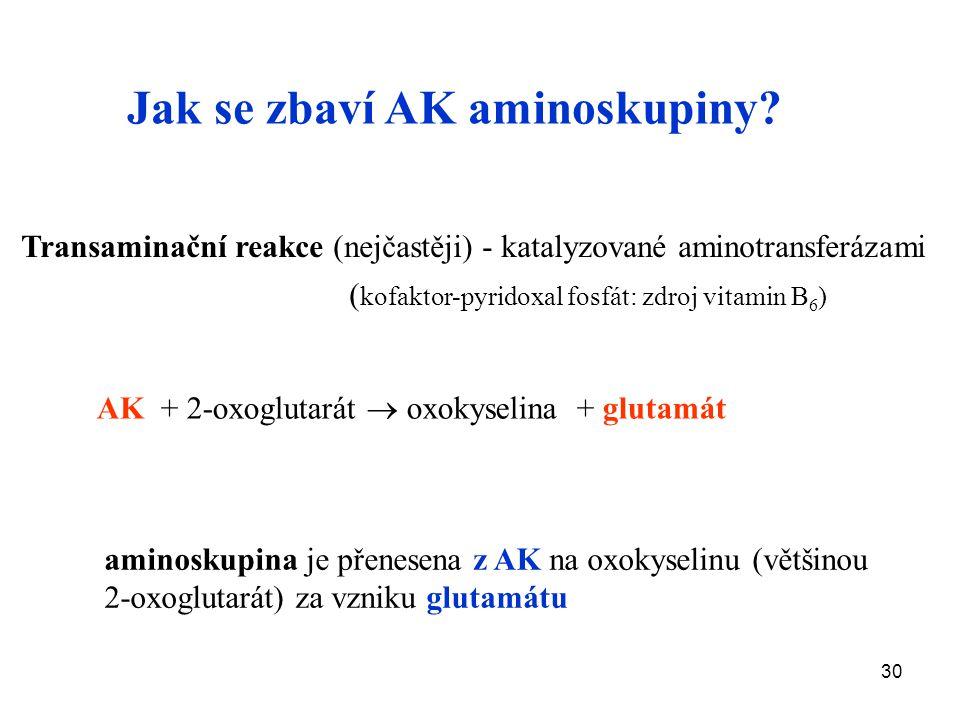 30 Transaminační reakce (nejčastěji) - katalyzované aminotransferázami ( kofaktor-pyridoxal fosfát: zdroj vitamin B 6 ) AK + 2-oxoglutarát  oxokyselina + glutamát aminoskupina je přenesena z AK na oxokyselinu (většinou 2-oxoglutarát) za vzniku glutamátu Jak se zbaví AK aminoskupiny?
