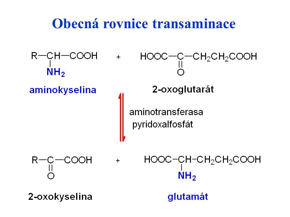 Obecná rovnice transaminace