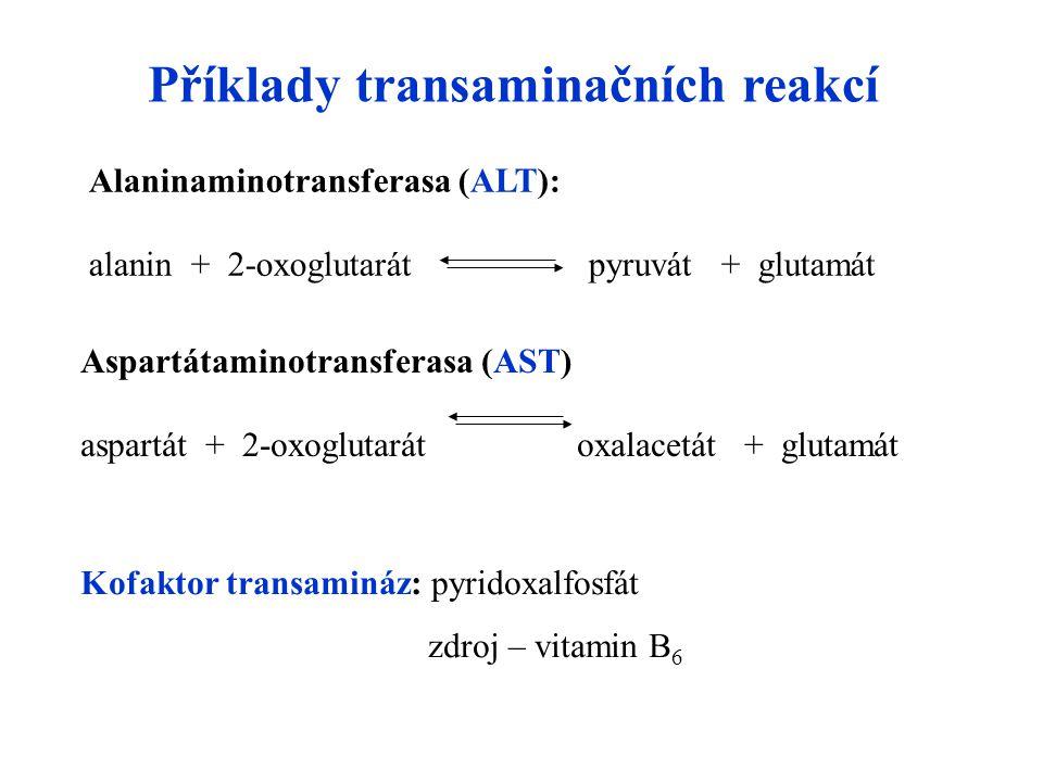 Alaninaminotransferasa (ALT): alanin + 2-oxoglutarát pyruvát + glutamát Příklady transaminačních reakcí Aspartátaminotransferasa (AST) aspartát + 2-oxoglutarát oxalacetát + glutamát Kofaktor transamináz: pyridoxalfosfát zdroj – vitamin B 6