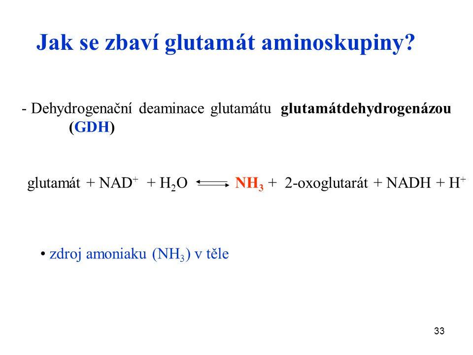 33 - Dehydrogenační deaminace glutamátu glutamátdehydrogenázou (GDH) glutamát + NAD + + H 2 O NH 3 + 2-oxoglutarát + NADH + H + Jak se zbaví glutamát