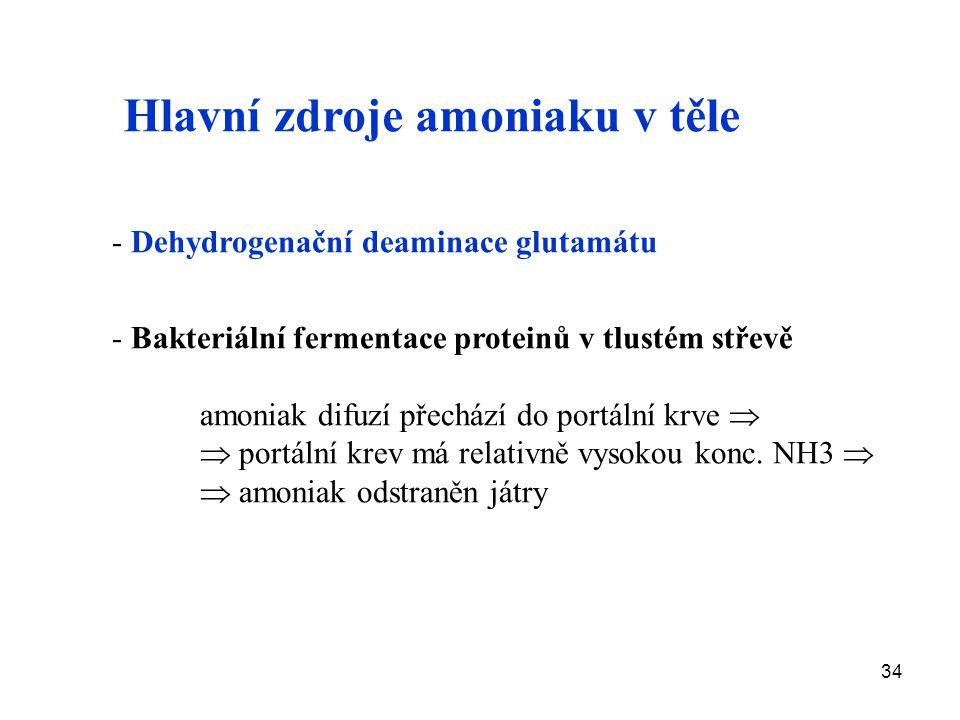 34 - Dehydrogenační deaminace glutamátu - Bakteriální fermentace proteinů v tlustém střevě amoniak difuzí přechází do portální krve   portální krev