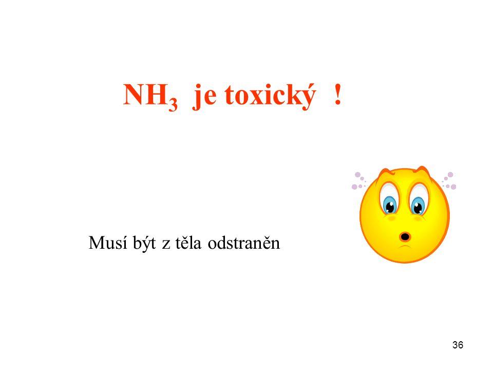 36 NH 3 je toxický ! Musí být z těla odstraněn