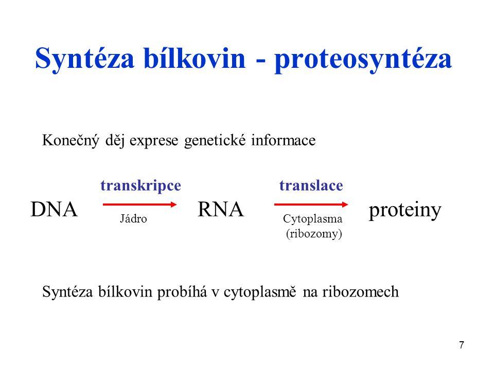 7 Syntéza bílkovin - proteosyntéza DNA RNA proteiny transkripcetranslace Konečný děj exprese genetické informace JádroCytoplasma (ribozomy) Syntéza bílkovin probíhá v cytoplasmě na ribozomech