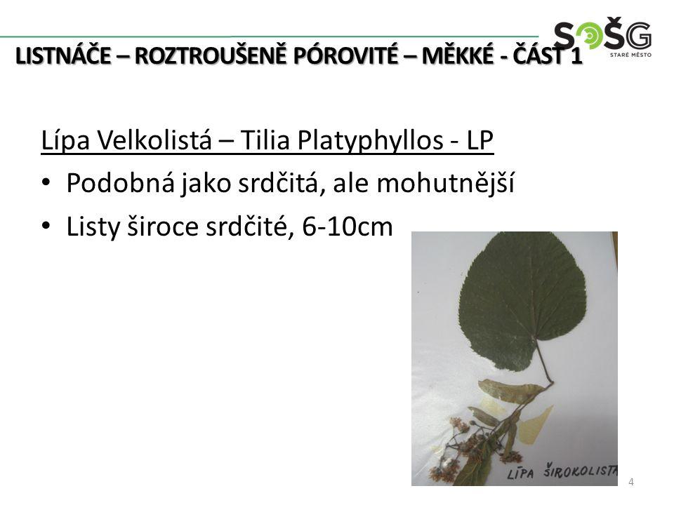 LISTNÁČE – ROZTROUŠENĚ PÓROVITÉ – MĚKKÉ - ČÁST 1 Lípa Velkolistá – Tilia Platyphyllos - LP Podobná jako srdčitá, ale mohutnější Listy široce srdčité, 6-10cm 4