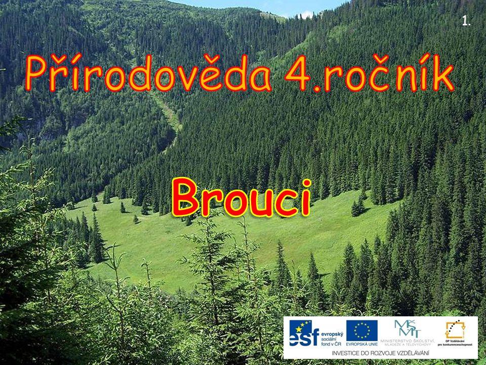 Je známo asi 400 000 druhů.V České republice žije okolo 6000 druhů.