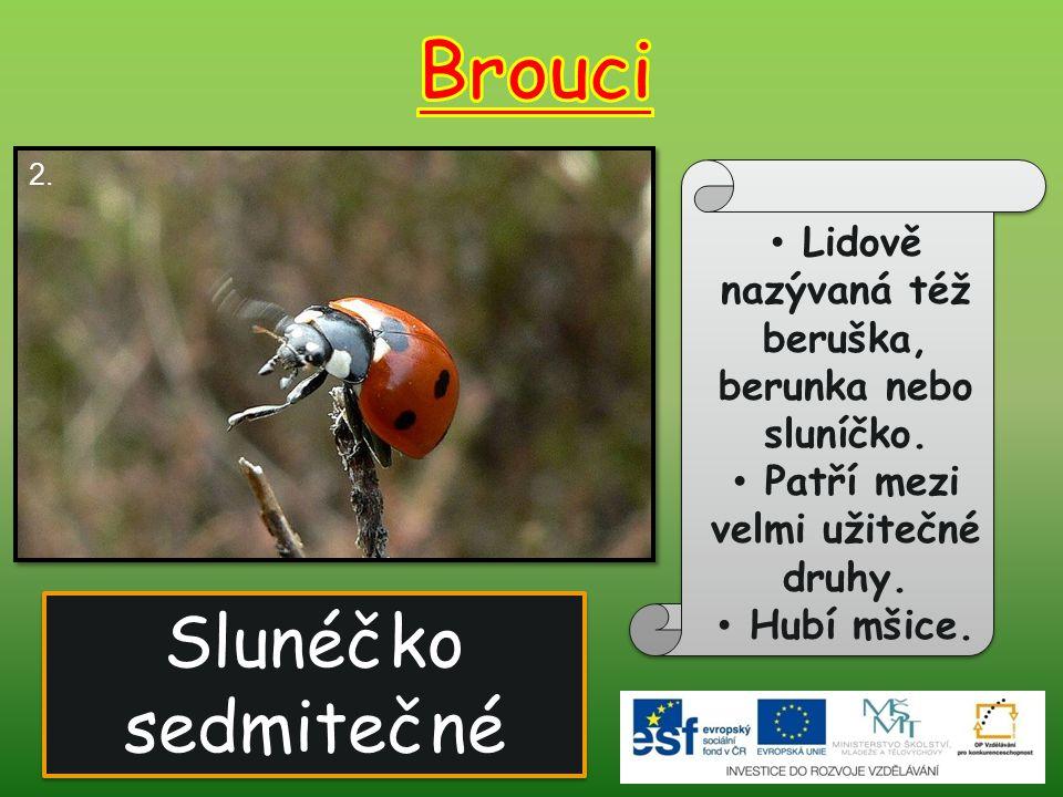 Slunéčko sedmitečné Lidově nazývaná též beruška, berunka nebo sluníčko. Patří mezi velmi užitečné druhy. Hubí mšice. 2.
