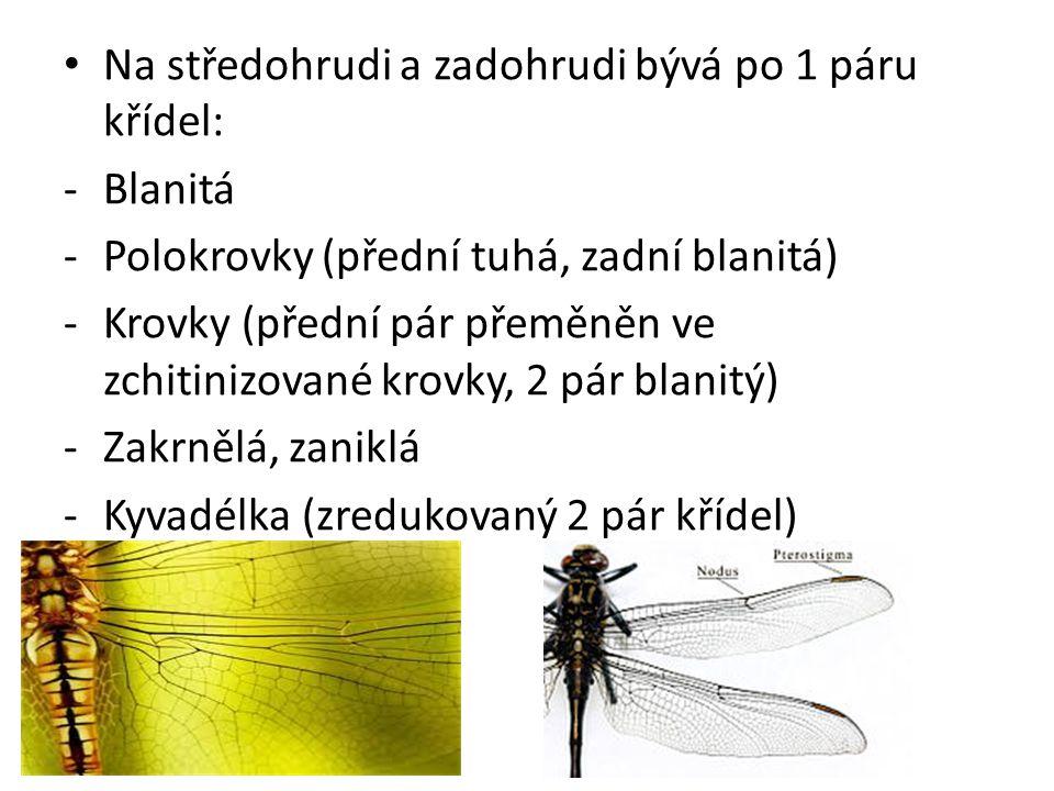 Na středohrudi a zadohrudi bývá po 1 páru křídel: -Blanitá -Polokrovky (přední tuhá, zadní blanitá) -Krovky (přední pár přeměněn ve zchitinizované kro