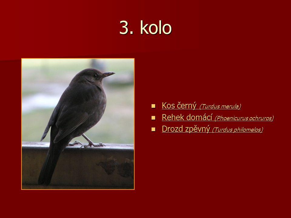 3. kolo Kos černý (Turdus merula) Kos černý (Turdus merula) Kos černý (Turdus merula) Kos černý (Turdus merula) Rehek domácí (Phoenicurus ochruros) Re