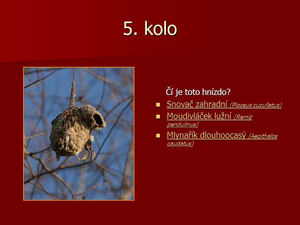 5. kolo Čí je toto hnízdo. Čí je toto hnízdo.
