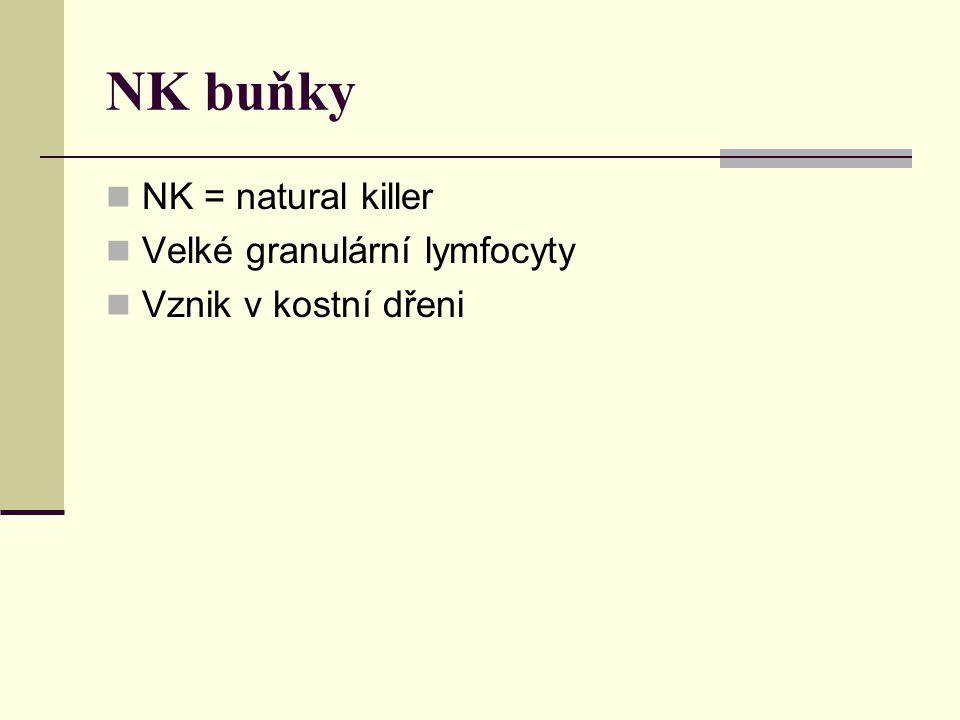 NK buňky NK = natural killer Velké granulární lymfocyty Vznik v kostní dřeni