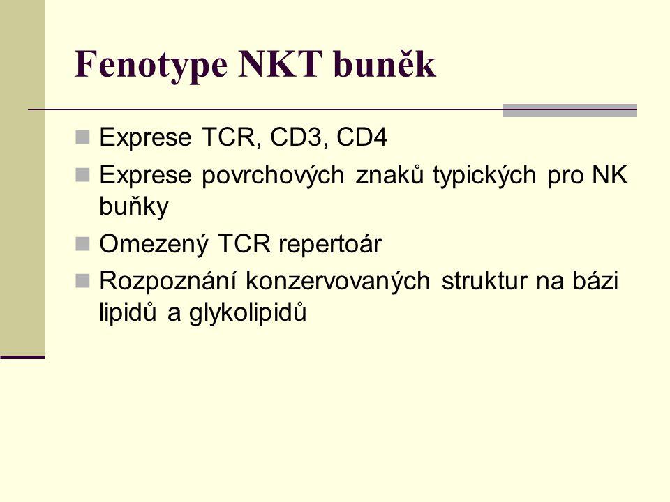 Fenotype NKT buněk Exprese TCR, CD3, CD4 Exprese povrchových znaků typických pro NK buňky Omezený TCR repertoár Rozpoznání konzervovaných struktur na