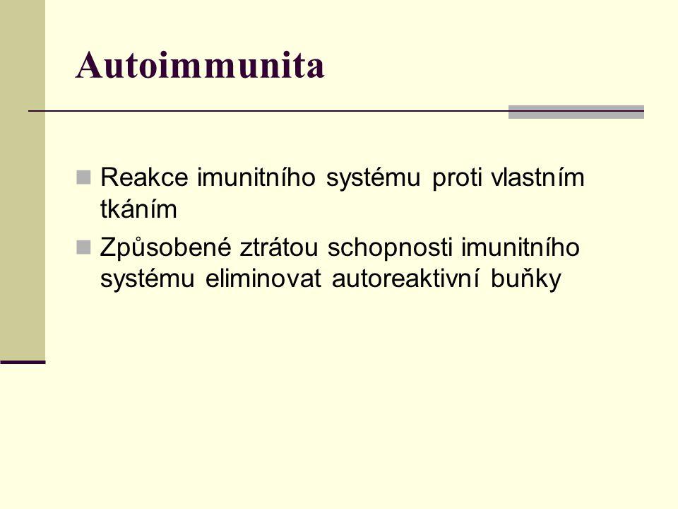 Autoimmunita Reakce imunitního systému proti vlastním tkáním Způsobené ztrátou schopnosti imunitního systému eliminovat autoreaktivní buňky