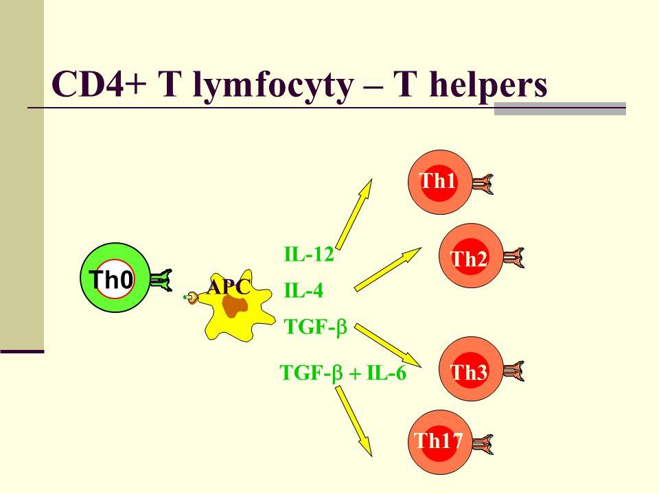 CD4+ T lymfocyty – T helpers IL-12 IL-4 TGF-  Th1 Th2 Th3 Th0 APC Th0 TGF-  IL-6 Th17
