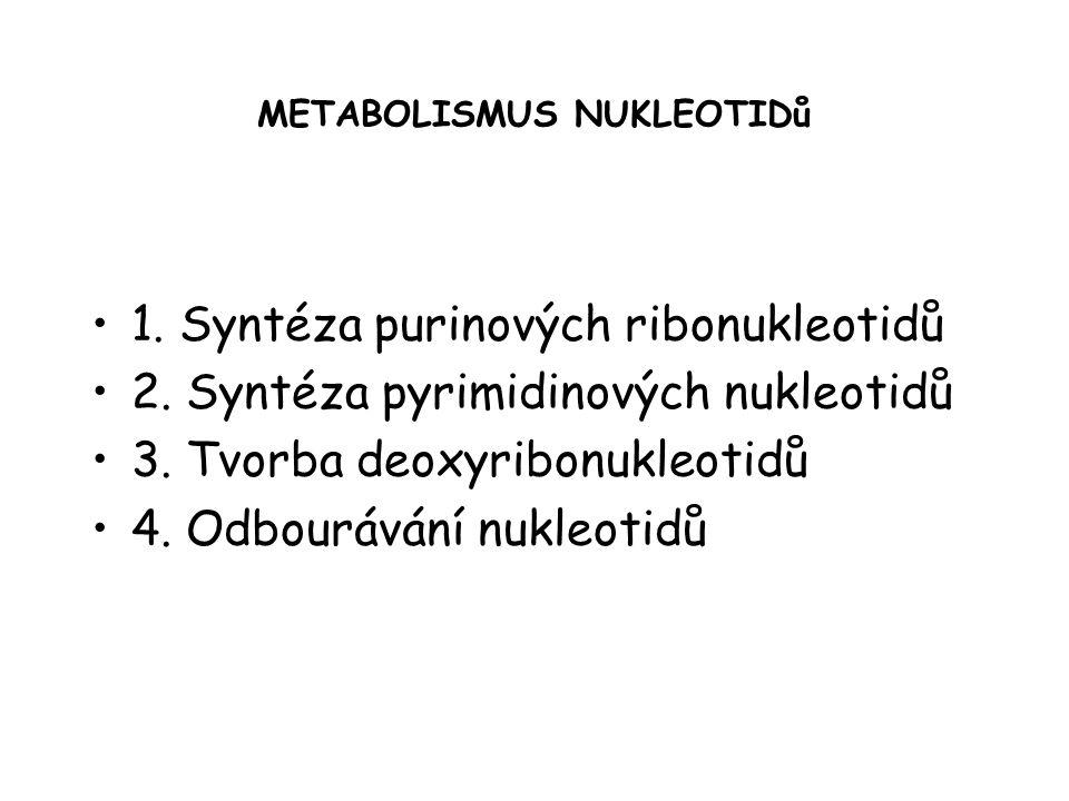 METABOLISMUS NUKLEOTIDů 1.Syntéza purinových ribonukleotidů 2.