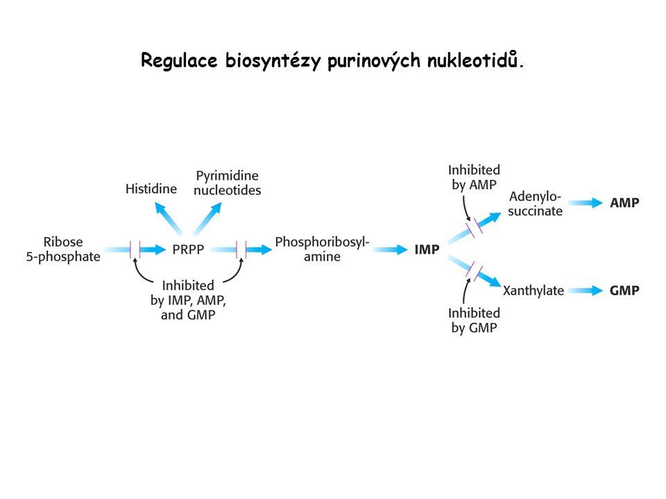Regulace biosyntézy purinových nukleotidů.