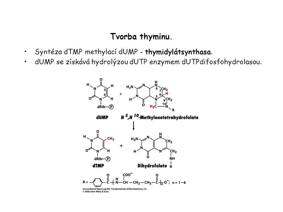 Tvorba thyminu.Syntéza dTMP methylací dUMP - thymidylátsynthasa.