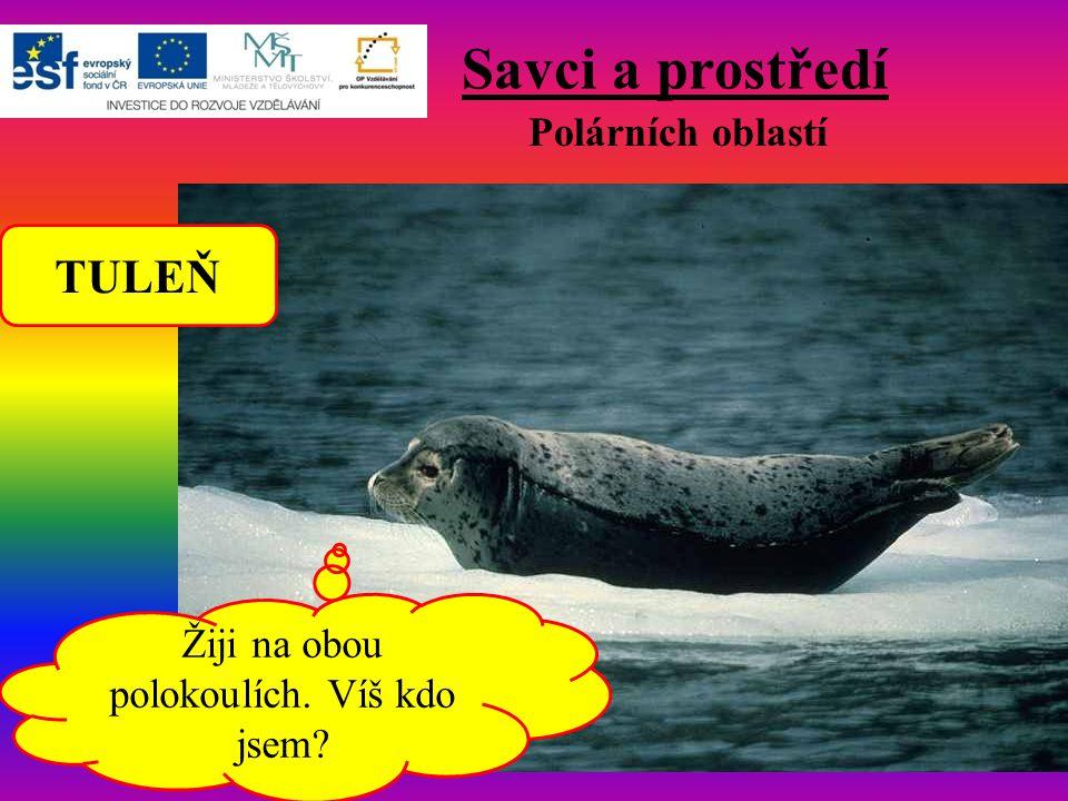 Savci a prostředí Polárních oblastí Žiji na obou polokoulích. Víš kdo jsem? TULEŇ