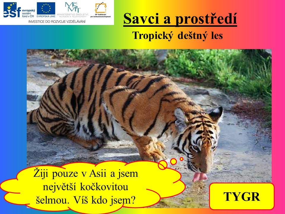 Savci a prostředí Tropický deštný les Žiji pouze v Asii a jsem největší kočkovitou šelmou.