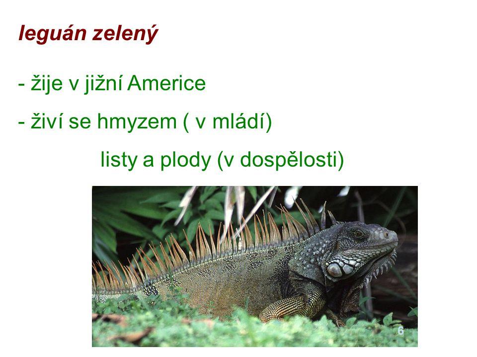 leguán zelený - žije v jižní Americe - živí se hmyzem ( v mládí) listy a plody (v dospělosti) 6