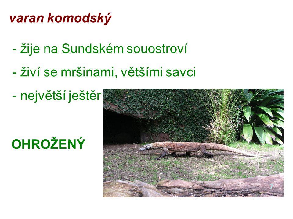 varan komodský - žije na Sundském souostroví - živí se mršinami, většími savci - největší ještěr OHROŽENÝ 7