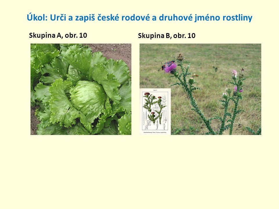 Úkol: Urči a zapiš české rodové a druhové jméno rostliny Skupina A, obr. 10 Skupina B, obr. 10