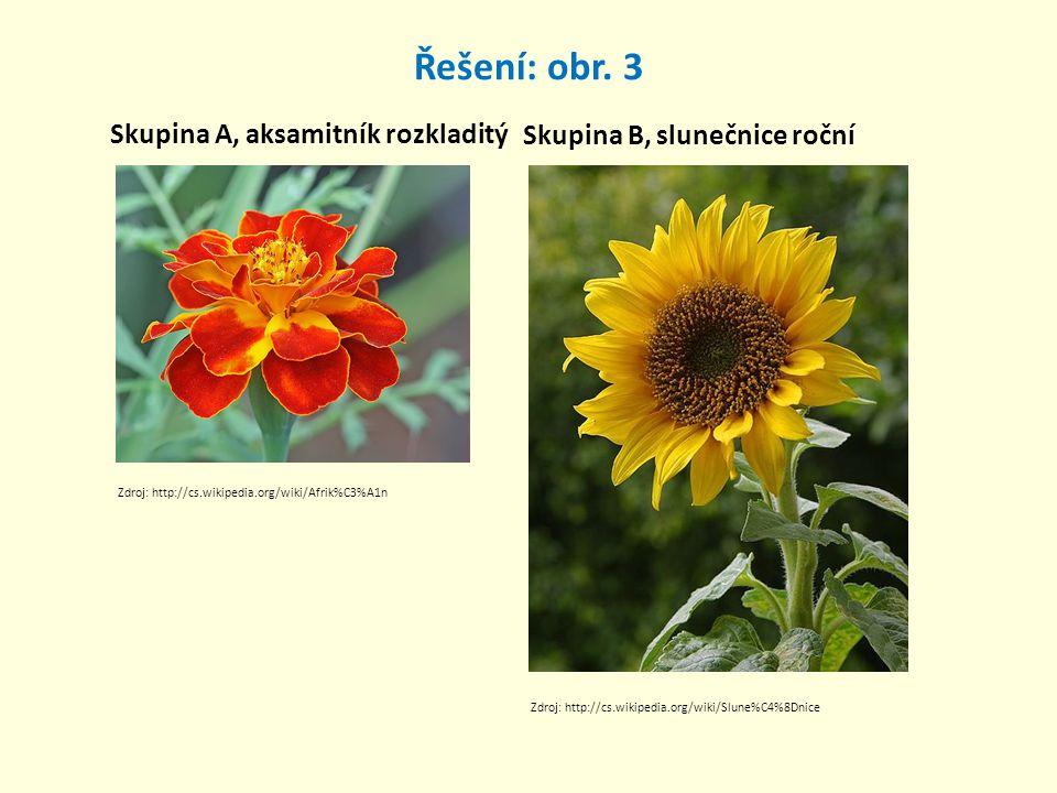 Řešení: obr. 3 Skupina A, aksamitník rozkladitý Skupina B, slunečnice roční Zdroj: http://cs.wikipedia.org/wiki/Afrik%C3%A1n Zdroj: http://cs.wikipedi