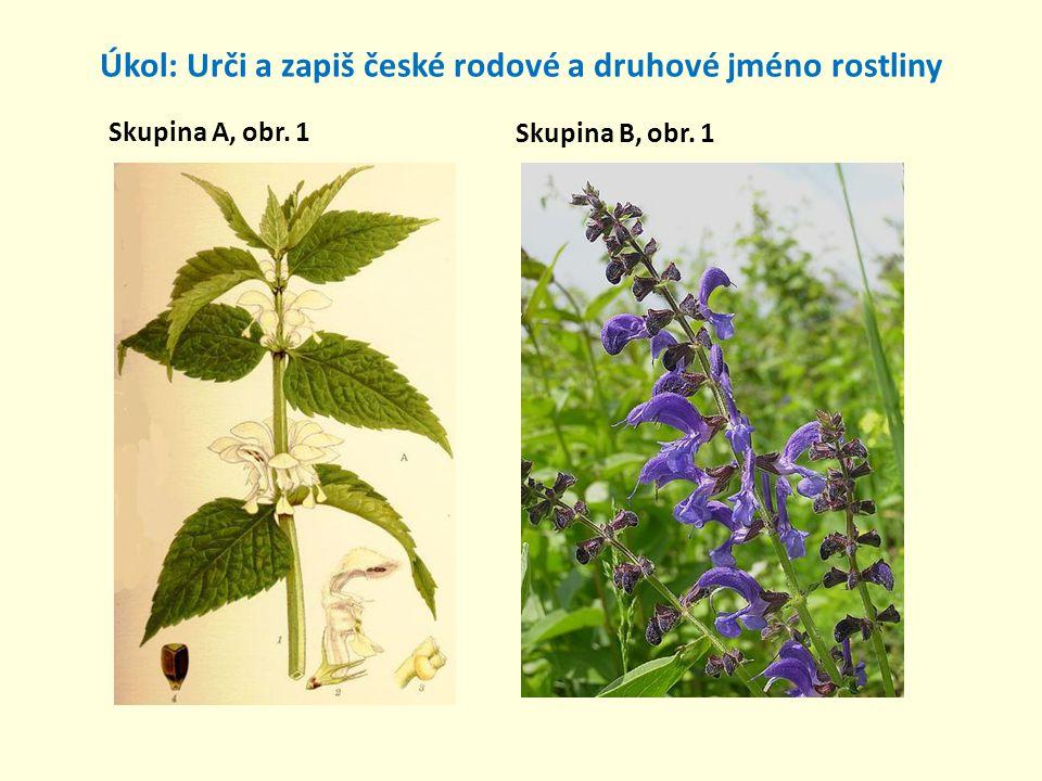 Úkol: Urči a zapiš české rodové a druhové jméno rostliny Skupina A, obr. 1 Skupina B, obr. 1