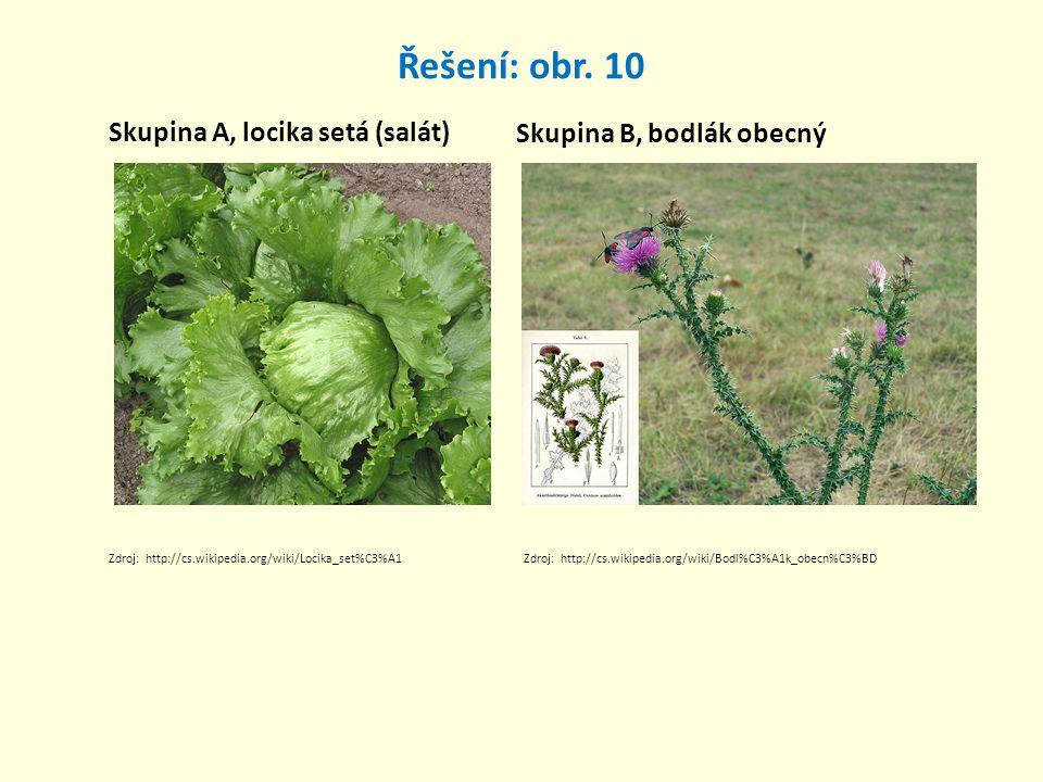Řešení: obr. 10 Skupina A, locika setá (salát) Skupina B, bodlák obecný Zdroj: http://cs.wikipedia.org/wiki/Locika_set%C3%A1Zdroj: http://cs.wikipedia