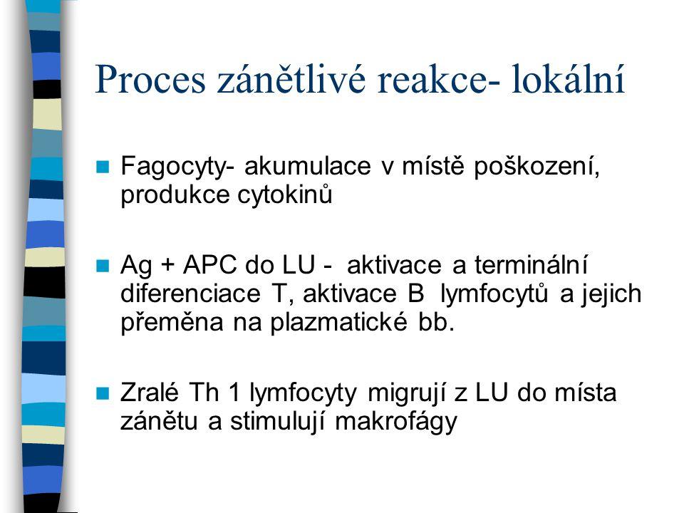 Proces zánětlivé reakce- lokální Fagocyty- akumulace v místě poškození, produkce cytokinů Ag + APC do LU - aktivace a terminální diferenciace T, aktiv