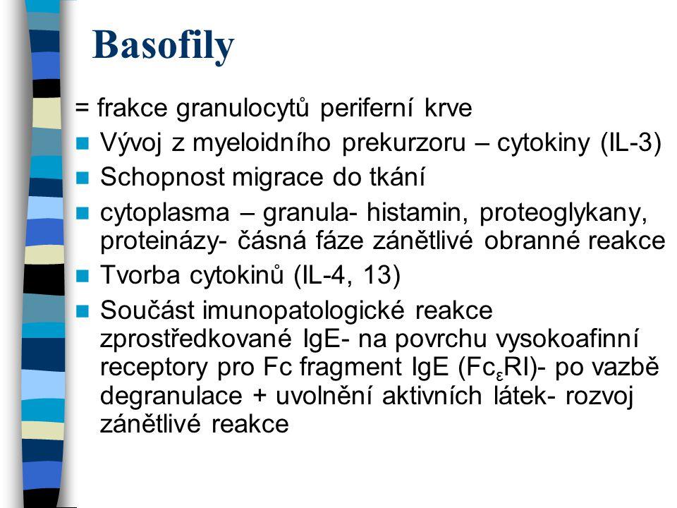 Basofily = frakce granulocytů periferní krve Vývoj z myeloidního prekurzoru – cytokiny (IL-3) Schopnost migrace do tkání cytoplasma – granula- histami