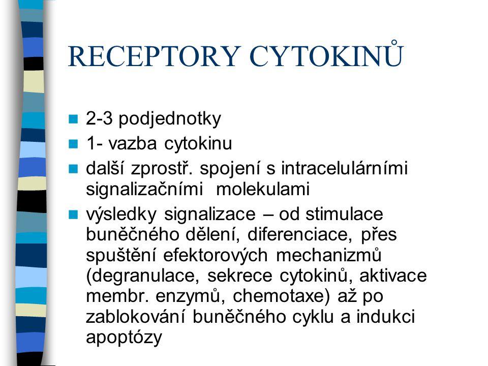 RECEPTORY CYTOKINŮ 2-3 podjednotky 1- vazba cytokinu další zprostř. spojení s intracelulárními signalizačními molekulami výsledky signalizace – od sti