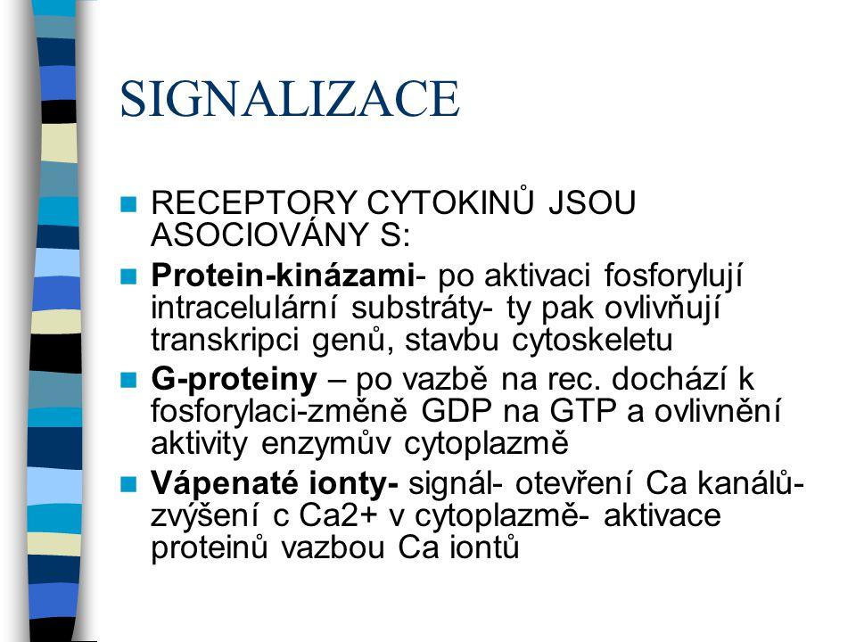 SIGNALIZACE RECEPTORY CYTOKINŮ JSOU ASOCIOVÁNY S: Protein-kinázami- po aktivaci fosforylují intracelulární substráty- ty pak ovlivňují transkripci gen