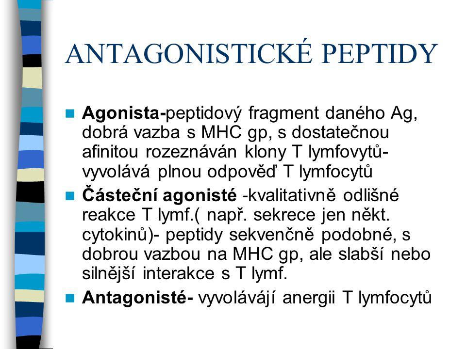 ANTAGONISTICKÉ PEPTIDY Agonista-peptidový fragment daného Ag, dobrá vazba s MHC gp, s dostatečnou afinitou rozeznáván klony T lymfovytů- vyvolává plno