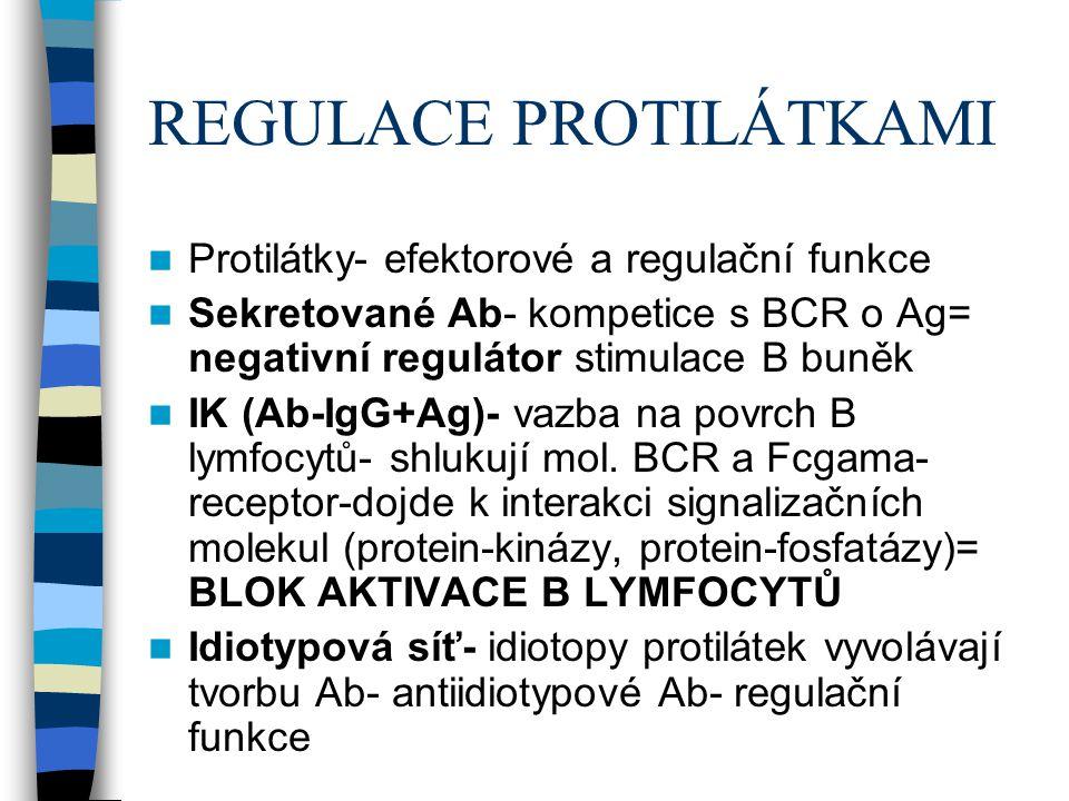 REGULACE PROTILÁTKAMI Protilátky- efektorové a regulační funkce Sekretované Ab- kompetice s BCR o Ag= negativní regulátor stimulace B buněk IK (Ab-IgG