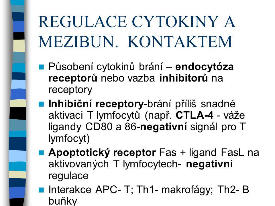 REGULACE CYTOKINY A MEZIBUN. KONTAKTEM Působení cytokinů brání – endocytóza receptorů nebo vazba inhibitorů na receptory Inhibiční receptory-brání pří