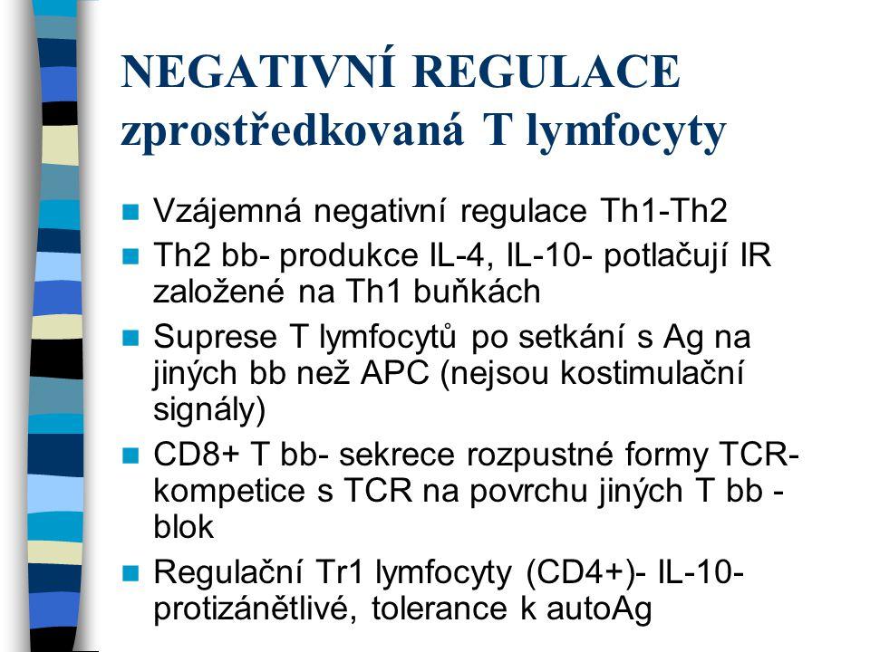 NEGATIVNÍ REGULACE zprostředkovaná T lymfocyty Vzájemná negativní regulace Th1-Th2 Th2 bb- produkce IL-4, IL-10- potlačují IR založené na Th1 buňkách